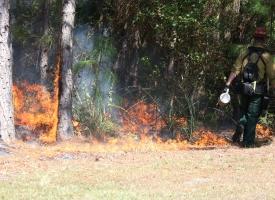 Prescribed Burn planned for Eagle Loop Section of Gulf State Park between Nov. 7-30