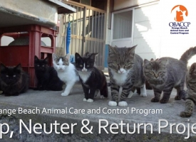 Orange Beach Trap, Neuter and Release project